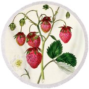 The Roseberry Strawberry Round Beach Towel by Edwin Dalton Smith