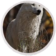 Round Beach Towel featuring the photograph The Sentinel by Wolves Only