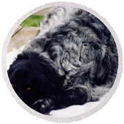 The Shaggy Dog Named Shaddy Round Beach Towel by Marian Cates