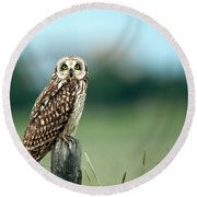 The Short-eared Owl  Round Beach Towel