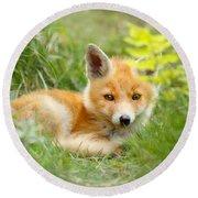 The Shy Kit Fox Cub Hiding Behind Some Ferns Round Beach Towel