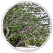 Round Beach Towel featuring the photograph The Tree by Andrea Anderegg