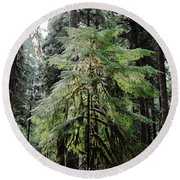 The Tree In The Forest Round Beach Towel