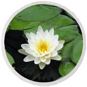 Round Beach Towel featuring the photograph The Water Lilies Collection - 01 by Pamela Critchlow
