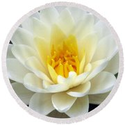 Round Beach Towel featuring the photograph The Water Lilies Collection - 03 by Pamela Critchlow
