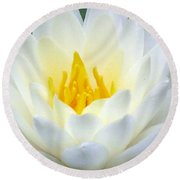 Round Beach Towel featuring the photograph The Water Lilies Collection - 05 by Pamela Critchlow