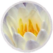 Round Beach Towel featuring the photograph The Water Lilies Collection - 11 by Pamela Critchlow
