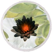 Round Beach Towel featuring the photograph The Water Lilies Collection - Photopower 1034 by Pamela Critchlow