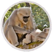There Is Nothing Like A  Backscratch - Monkeys Rishikesh India Round Beach Towel