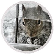 Thief In The Birdfeeder Round Beach Towel