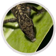Round Beach Towel featuring the photograph Thirsty Brown Anole by Meg Rousher