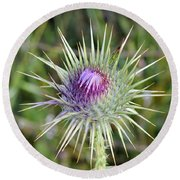 Round Beach Towel featuring the photograph Thistle Flower by George Atsametakis