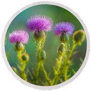 Thistle In The Sun Round Beach Towel