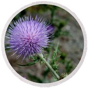 Round Beach Towel featuring the photograph Thistle by Rod Wiens