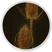 Round Beach Towel featuring the photograph Thistles by Hanny Heim