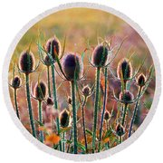 Thistles With Sunset Light Round Beach Towel