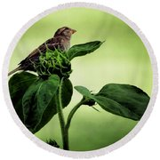 Thoughtful Sparrow Round Beach Towel