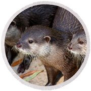 Three Otters Round Beach Towel by Daniel Eskridge