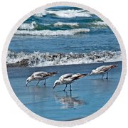 Round Beach Towel featuring the photograph Three Seagulls At Ocean Shore Art Prints by Valerie Garner