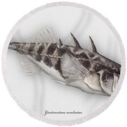 Three-spined Stickleback Gasterosteus Aculeatus - Stichling - L'epinoche - Espinoso - Kolmipiikki Round Beach Towel