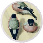 Three Studies Of A Bullfinch Round Beach Towel