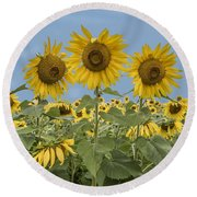 Three Sunflowers At The Front Of A Sunflower Field Round Beach Towel