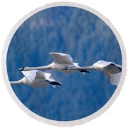 Three Swans Flying Round Beach Towel