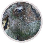 Three Toed Sloth Round Beach Towel by Anne Rodkin