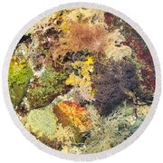 Tidal Pool Color Round Beach Towel by Debbie Green