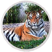 Round Beach Towel featuring the photograph Tiger 2 by Marty Koch