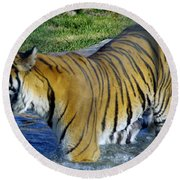 Tiger 4 Round Beach Towel