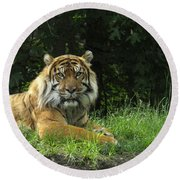 Round Beach Towel featuring the photograph Tiger At Rest by Lingfai Leung