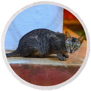 Tiger Cat With Luminous Eyes Round Beach Towel