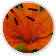 Round Beach Towel featuring the photograph Tiger Lily by Bianca Nadeau