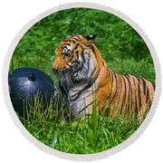 Tiger Playing With Ball Round Beach Towel
