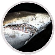 Round Beach Towel featuring the photograph Tiger Shark by Sergey Lukashin