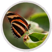 Tiger Striped Butterfly Round Beach Towel