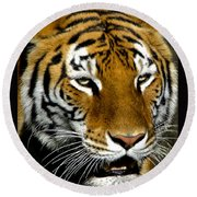 Tiger Tiger Burning Bright Round Beach Towel by Venetia Featherstone-Witty