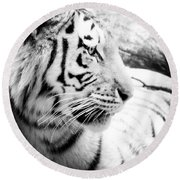 Round Beach Towel featuring the photograph Tiger Watch by Erika Weber