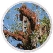 Tikal Furry Tree Closeup Round Beach Towel