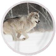 Timber Wolf, Minnesota Round Beach Towel