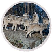 Timber Wolf Pack Round Beach Towel