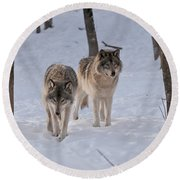 Round Beach Towel featuring the photograph Timber Wolf Pair  by Wolves Only