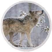 Timber Wolf Pictures 188 Round Beach Towel