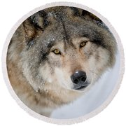 Timber Wolf Pictures 255 Round Beach Towel