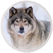 Timber Wolf Pictures 256 Round Beach Towel