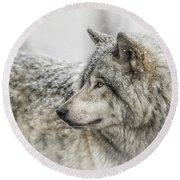 Timber Wolf Pictures 280 Round Beach Towel
