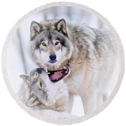 Timber Wolf Pictures 56 Round Beach Towel
