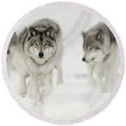Timber Wolf Pictures 65 Round Beach Towel