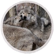 Round Beach Towel featuring the photograph Timber Wolves Playing by Wolves Only